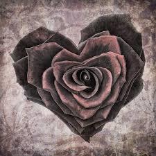 rose in heart shape